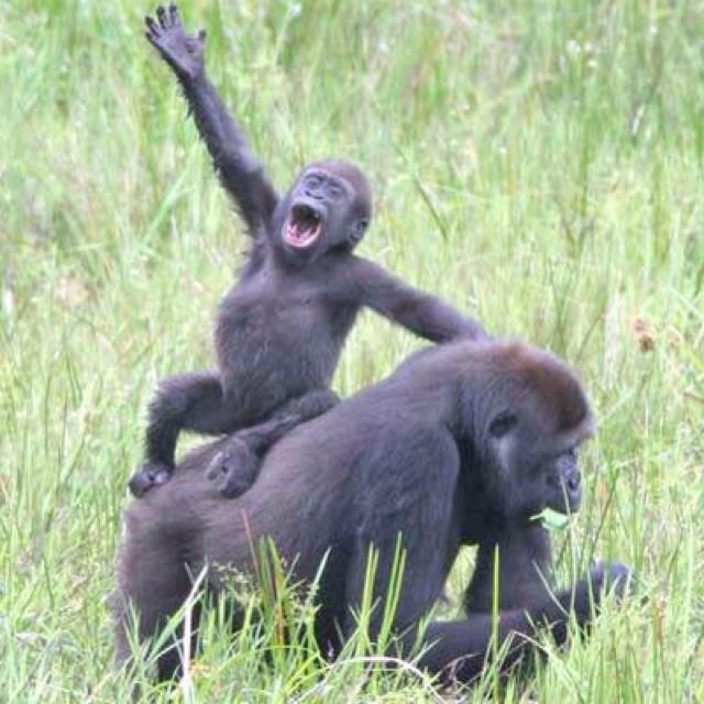 Rwanda | Animals | Pinterest