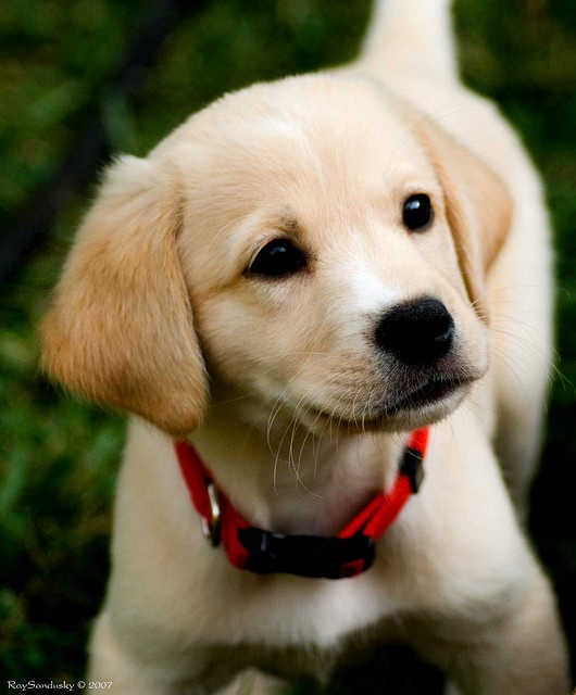 images of baby dogs - photo #16