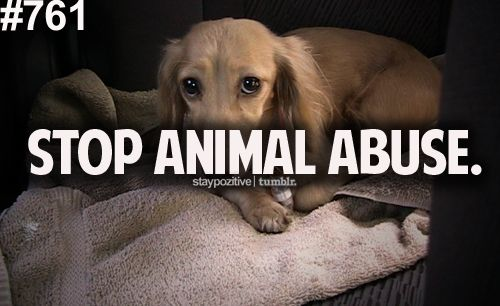 ohmyglamorous:  stop human abuse too.