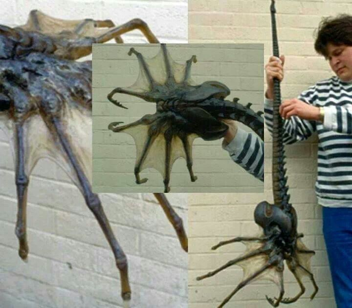 Real life giants spider - photo#2