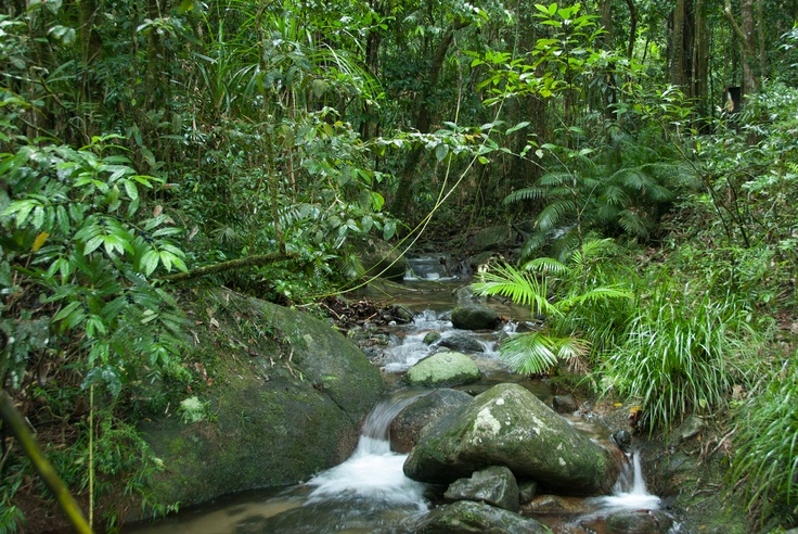 Daintree Australia  City pictures : Daintree Rainforest, Cairns, Australia. | Utimate Honeymoon | Pintere ...