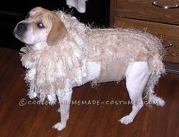 Cutest homemade lion costume for my dog tank