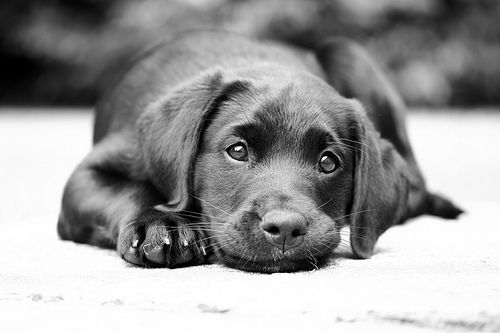 """""""A dog is the only thing on earth that loves you more than he loves himself"""