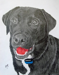 Our dog Riley, drawn by Jim Joye of Spot on Dog Portraits