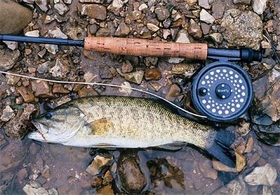Fly fishing for smallmouth bass smallmouth pattern for Fly fishing for smallmouth bass