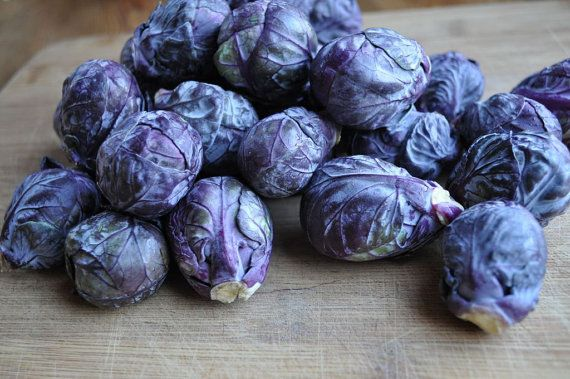 purple brussel sprouts how to grow