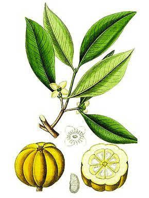 The Truth About Garcinia Cambogia #dental #poker #health #fitness