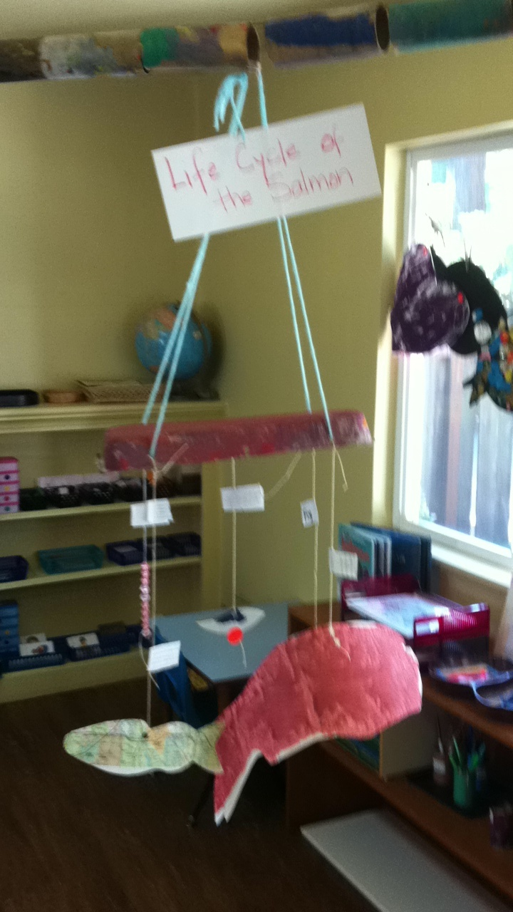 Classroom Mobiles Ideas : Mobile of the life cycle salmon great classroom