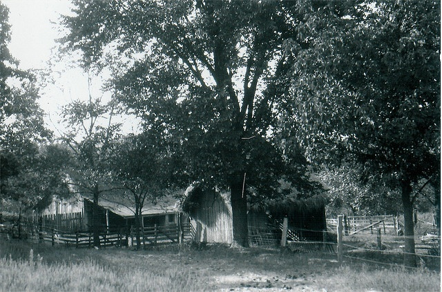 Barnyard of Rocky Ridge Farm during the time the Wilders lived there.