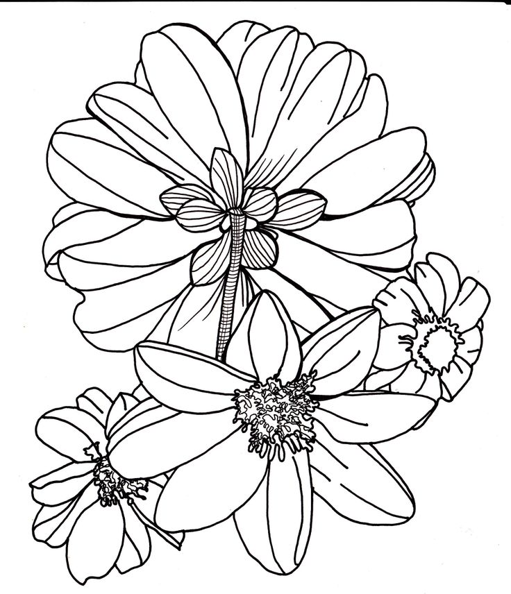 Dahlia Flower Line Drawing : Line drawing flowers dahlias drawings pinterest