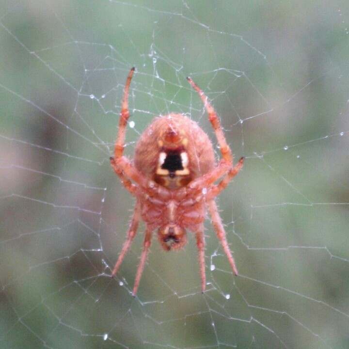 Ugly Spider In Garden You Re Freaking Me Out Pinterest