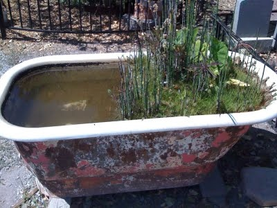 The gardens of italy for Bathtub fish pond