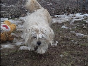 lost dogs of cny facebook