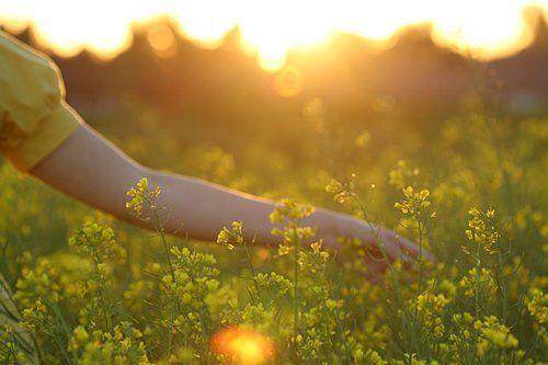 A walk through spring meadows