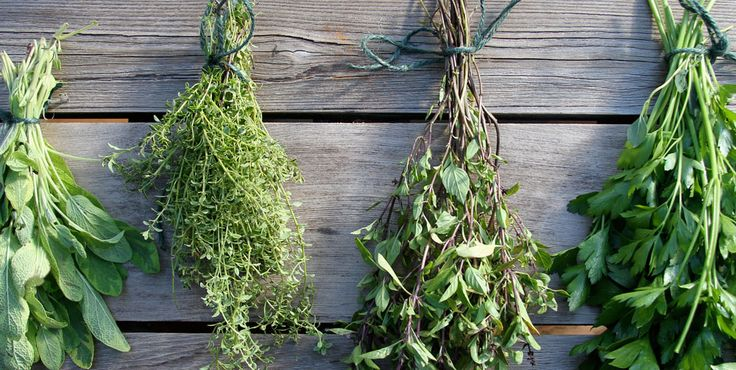 Drying herbs...