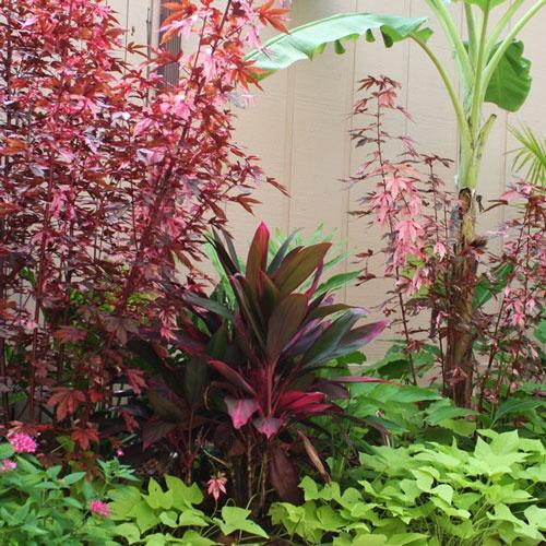 The Rainforest Garden