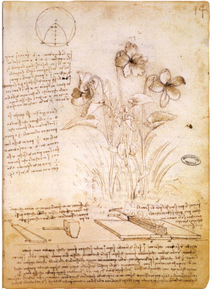 Botany creating an essay