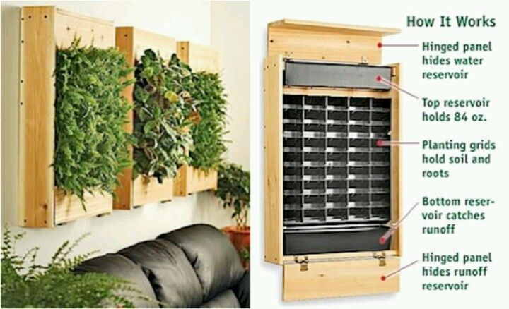 Indoor herb wall gardening pinterest Indoor living wall herb garden
