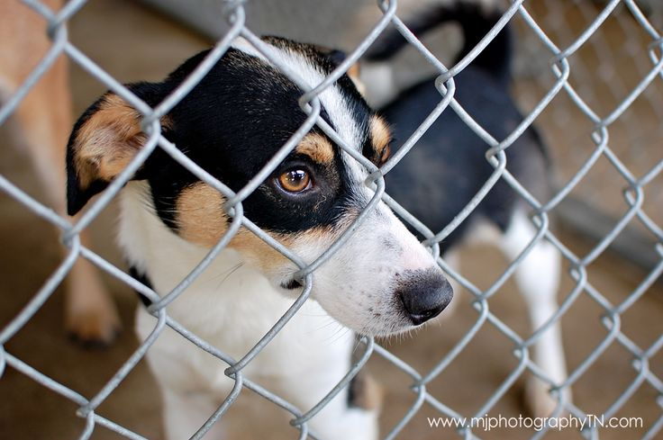 SBK Adoptable Pets!