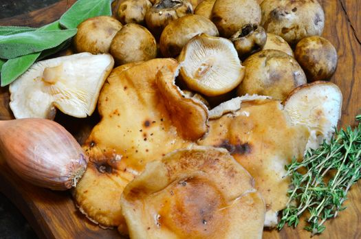 Mushroom Risotto with Italian Sausage and Parmigiano Reggiano