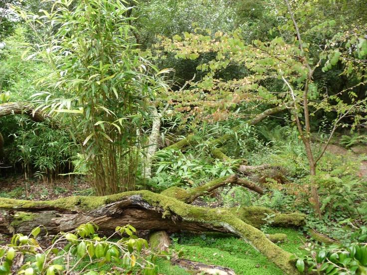 Japanese Gardens, Newquay, Cornwall  Garden Visits  Pinterest