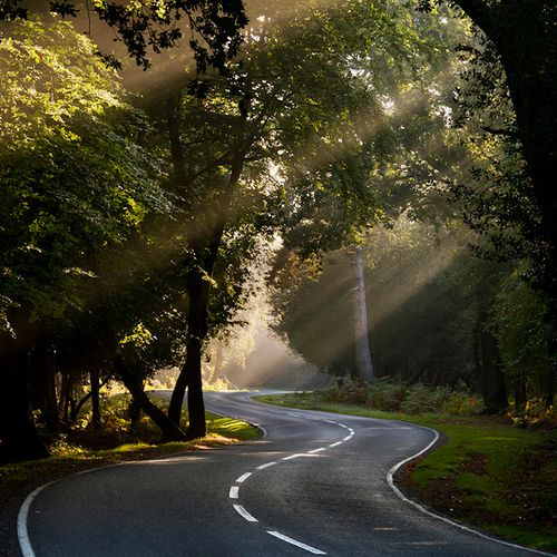 This moves me.... Sunlight dappling through the trees