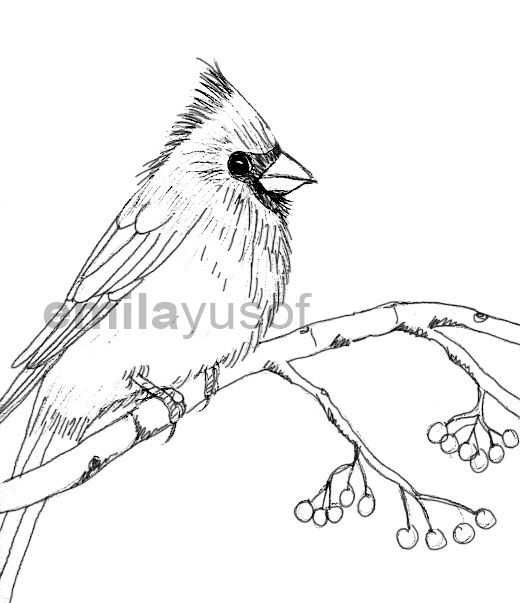how to draw a red cardinal bird