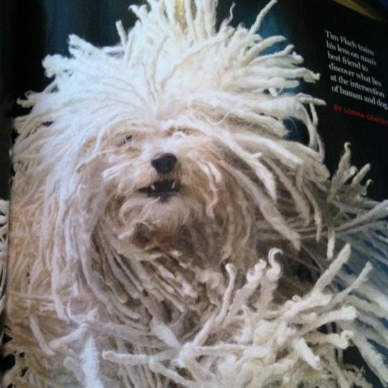 Mop Dog Real Name