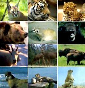 photos of wild animals - Google Search