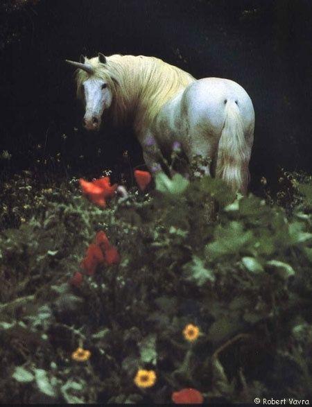Unicorn in meadow