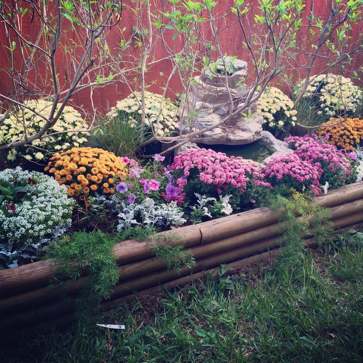 fall flower bed ideas photograph fall flowers