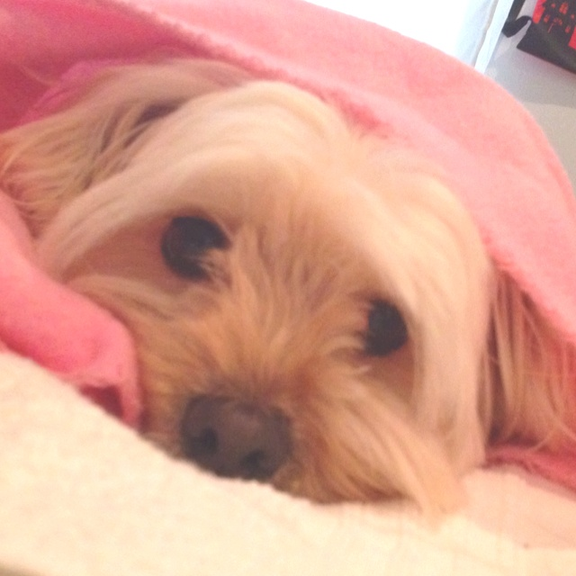 Sophia wrapped in freshly laundered blanket!