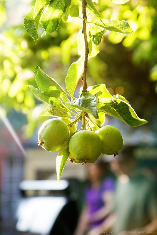 summerfood-bbq-apple2