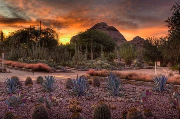Desert Botanical Garden Phoenix Az Sunrise Sunset Pinterest