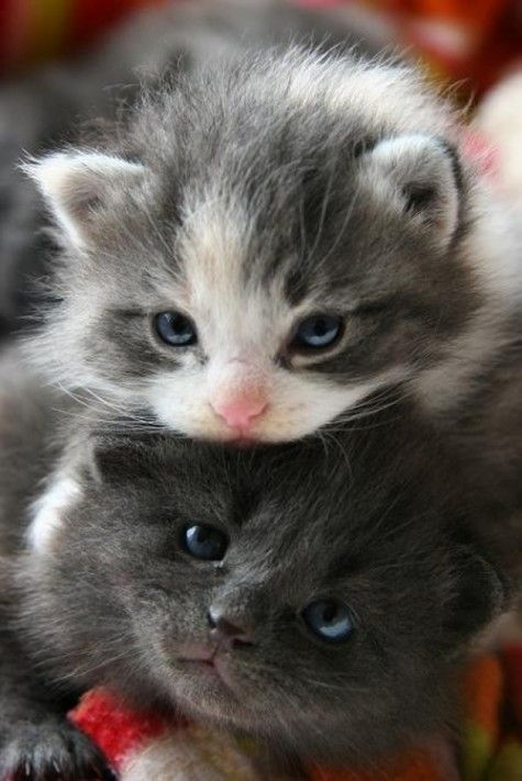 Stacked Kittens