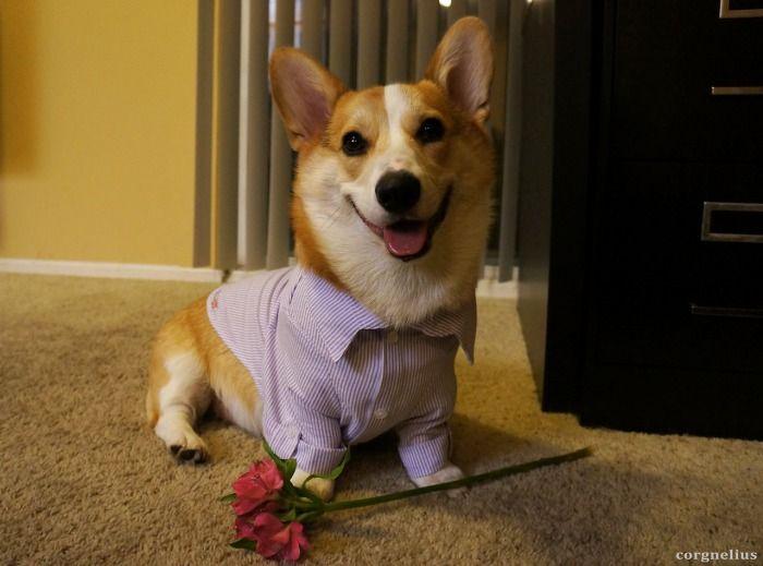 9gag valentines day