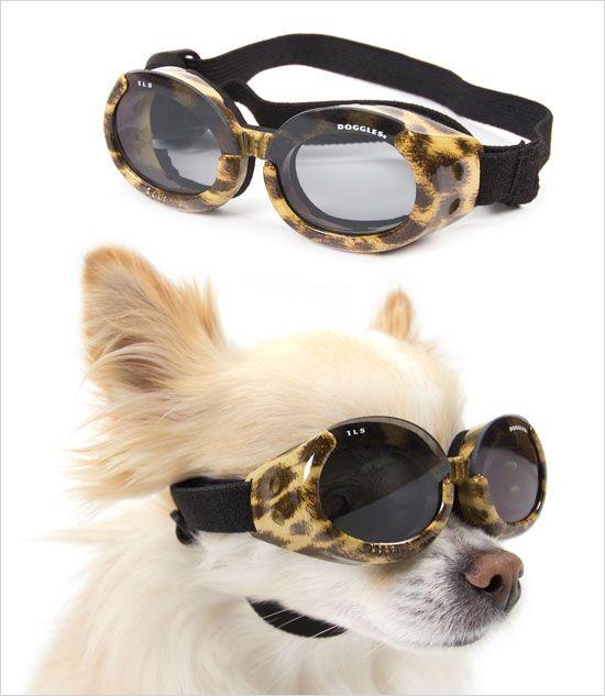 Leopard Doggles ILS Sunglasses