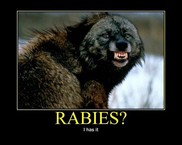 rabies | Animal Control - WAKE UP PEOPLE!!!! | Pinterest Raccoon With Rabies