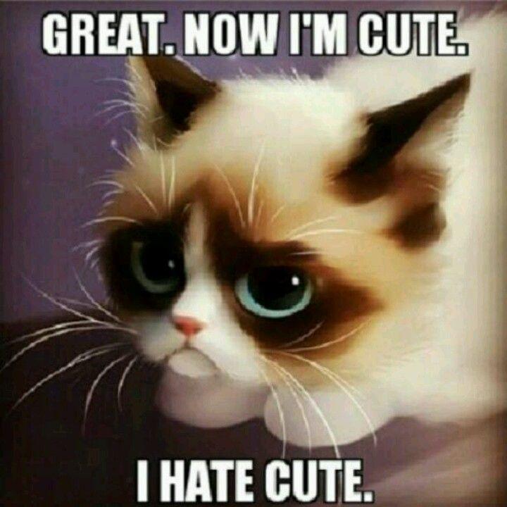 Funny Cat Cartoon Meme : Grumpy cat quotes with cartoon quotesgram