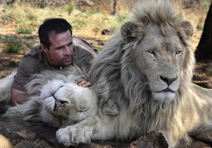 gustavo rodriguez and the lion:
