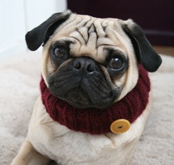 I need to get one of these for George!  allyouneedispug.com