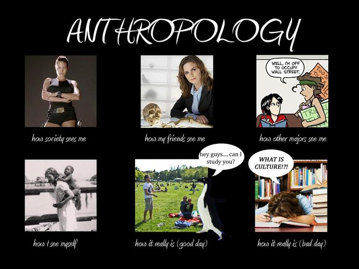 Anthropology what is a major