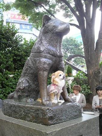Hachiko, SHIBUYA eki  Japanese and Asian Art  Pinterest