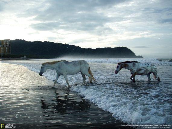 fotos de animales salvajes national geographic