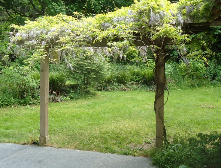 Cedar Arbor with Wisteria | Projects | Pinterest