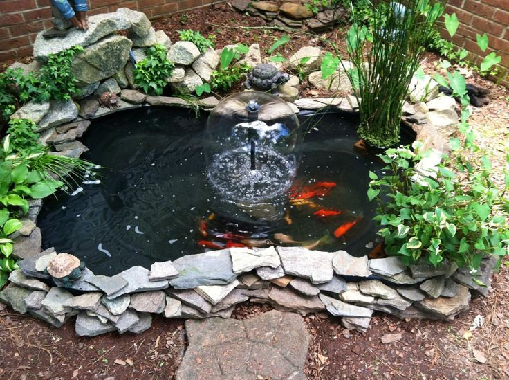 Goldfish pond garden pinterest for Outdoor goldfish pond ideas