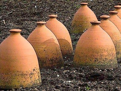 Terracotta garden cloches