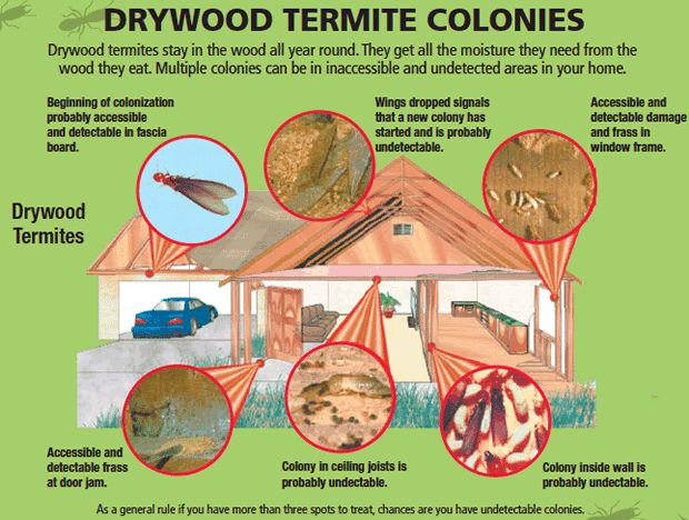 Pin By Corky S Pest Control Inc On Termites Pinterest