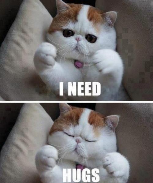Aww, okay, little kitty. I will hug you!