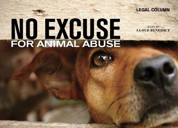 Image result for no excuse animal abuse
